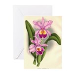 Orchid Antique Botanical Prin Greeting Cards (Pack