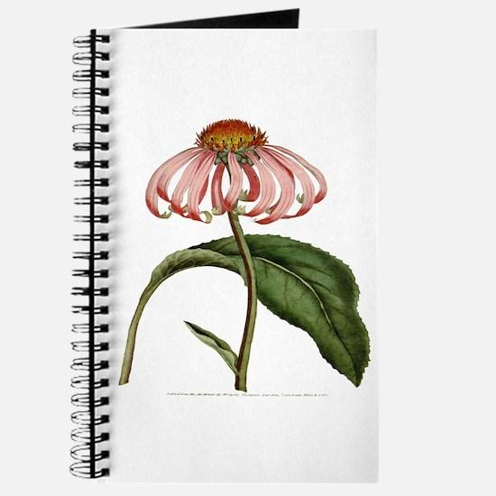 Curtis Botanical Magazine PL2 Vol1 Journal