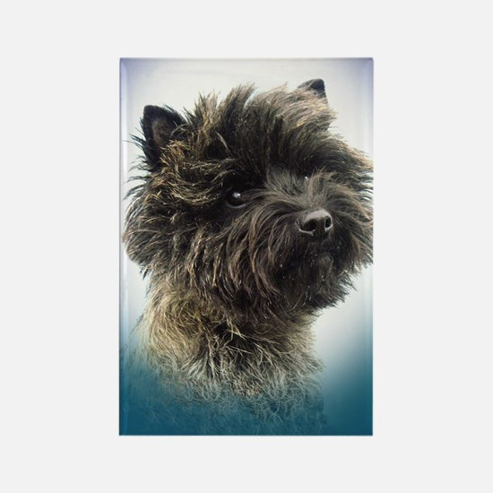 Cairn Terrier Top Champion Girl Rectangle Magnet