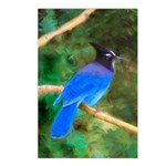 Steller's Jay Postcards (Package of 8)