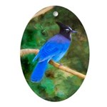 Steller's Jay Oval Ornament