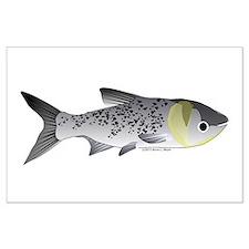 Bighead Carp (Asian Carp) fish Posters