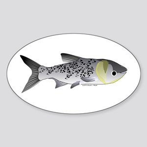 Bighead Carp (Asian Carp) fish Sticker