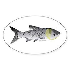 Bighead Carp (Asian Carp) fish Sticker