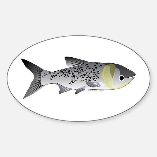 Bighead Carp (Asian Carp) fish Decal