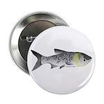 Bighead Carp (Asian Carp) fish 2.25