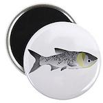 Bighead Carp (Asian Carp) fish Magnet