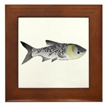 Bighead Carp (Asian Carp) fish Framed Tile