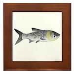 Bighead Carp (Asian Carp) fish Framed Tile