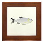 Silver Carp (Asian Carp) fish Framed Tile