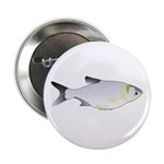 Silver Carp (Asian Carp) fish 2.25