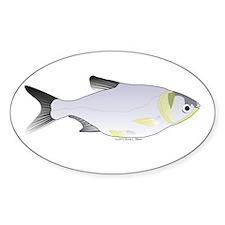 Silver Carp (Asian Carp) fish Sticker