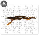 Gulper (Pelican) Eel fish Puzzle