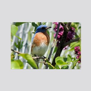 Bluebird in my Lilacs Rectangle Magnet
