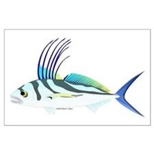 roosterfish posters
