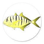 Yellow Trevally (aka Yellow Jack) fish Round Car M