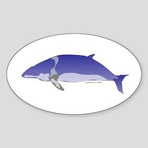 Minke Whale Sticker