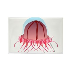Deep Sea Jellyfish (Crossota) Rectangle Magnet (10