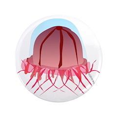 Deep Sea Jellyfish (Crossota) 3.5