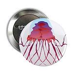 Deep Sea Jellyfish (Crossota Chillipeper) 2.25