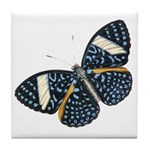 Blue Spotted Butterfly Tile Coaster