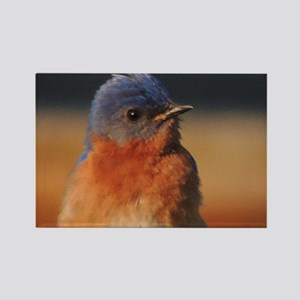 Fluffy Bluebird Rectangle Magnet