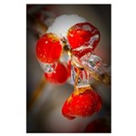 Viburnum Berries Covered with Ice Large Poster