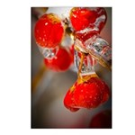 Viburnum Berries Covered Postcards (Package of 8)