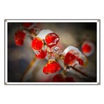Viburnum Berries Covered with Ice Banner