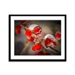 Viburnum Berries Covered with I Framed Panel Print