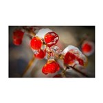 Viburnum Berries Covered with Ice 35x21 Wall Decal