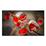Viburnum Berries Covered with Sticker (Rectangle)