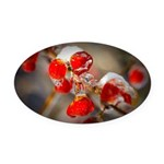 Viburnum Berries Covered with Ice Oval Car Magnet