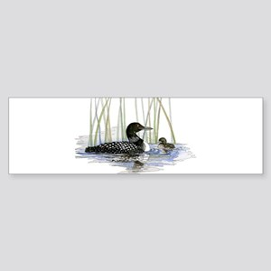 Loon and baby Bumper Sticker
