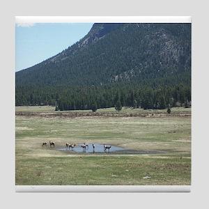 Elk in the Wild in Estes Park, Colorado Tile Coast