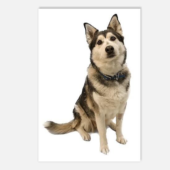 Alaskan Husky Postcards (Package of 8)