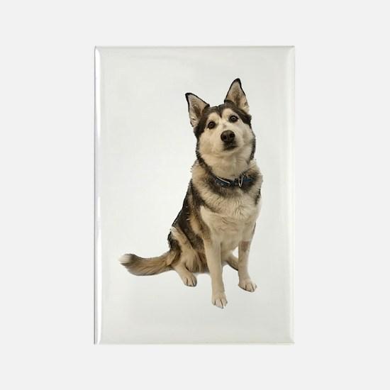 Alaskan Husky Rectangle Magnet