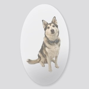 Alaskan Husky Sticker (Oval)