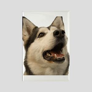 The Alaskan Husky Rectangle Magnet