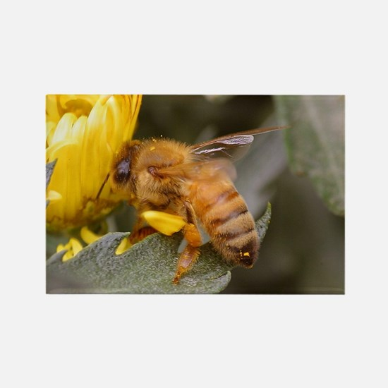 Busy Bee Rectangle Magnet
