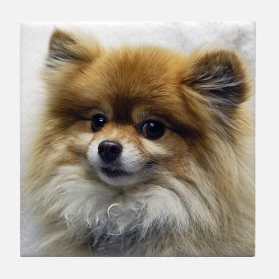 Pomeranian Cutie Tile Coaster