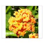 Lantana Orange Explosion Cluster Posters