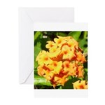 Lantana Orange Explosion Cluster Greeting Cards (P