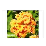 Lantana Orange Explosion Cluster Postcards (Packag