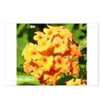 Lantana Orange Explosion Cluster Postcards (Packag