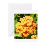 Lantana Orange Explosion Cluster Greeting Card