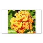 Lantana Orange Explosion Cluster Sticker