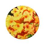 Lantana Orange Explosion Cluster 3.5