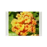 Lantana Orange Explosion Cluster Rectangle Magnet