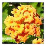 Lantana Orange Explosion Cluster Square Car Magnet
